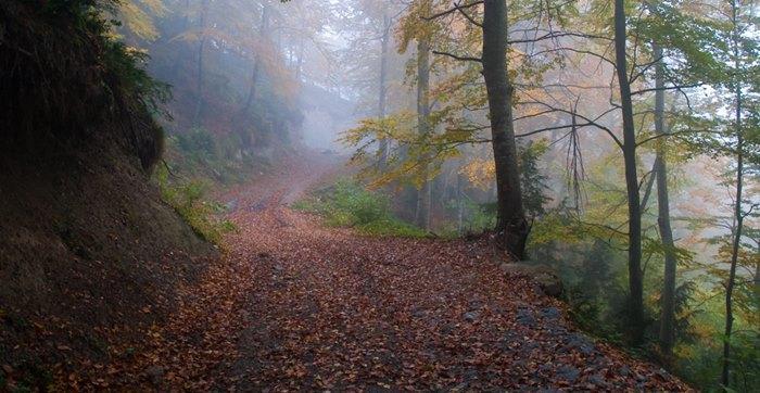 excursiones en otoño, La Fageda de la Grevosa